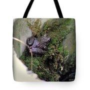 Frog On Moss On Wall Tote Bag
