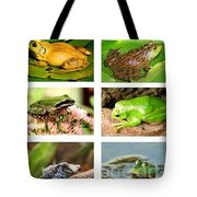 Frogs - Boxed Cards Tote Bag