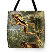 Frogs Detail Tote Bag