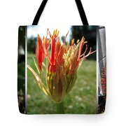 From Bud To Bloom - African Blood Lily Tote Bag