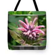 From Bud To Bloom - Bee Balm Named Panorama Pink Tote Bag
