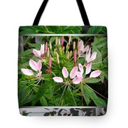 From Bud To Bloom - Cleome Named Pink Queen Tote Bag