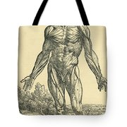 Front Of Male Human Body.anatomical Tote Bag
