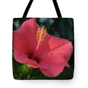 Front Porch Swing Tote Bag