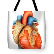 Front View Of Human Heart Tote Bag by Stocktrek Images