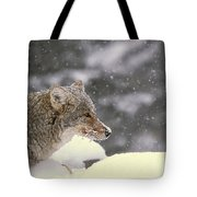 Frosty Coyote Tote Bag