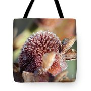 Frozen Dew Drops Melt From Canna Lily Seed Pods Tote Bag