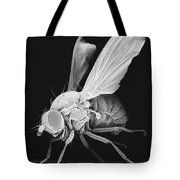 Fruit Fly Tote Bag
