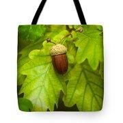 Fruit Of An Oak Tree Ripe In Autumn Tote Bag