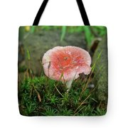 Fruiting Moss And Pink Mushroom Tote Bag
