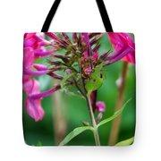 Fucia  Tubular Flowers Tote Bag