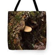 Fungus In Stump Hole Tote Bag