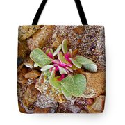 Fuzzy Plant On Blue Mesa Trail In Petrified Forest National Park-arizona  Tote Bag