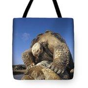 Galapagos Giant Tortoise Mating Alcedo Tote Bag