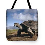 Galapagos Giant Tortoise On Alcedo Tote Bag