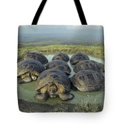Galapagos Giant Tortoises Wallowing Tote Bag