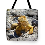 Galapagos Iguana On The Move Tote Bag