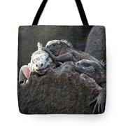 Galapagos Islands 09 Tote Bag