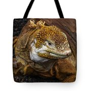 Galapagos Land Iguana  Tote Bag by Allen Sheffield