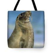 Galapagos Sea Lion Coral Beach Tote Bag