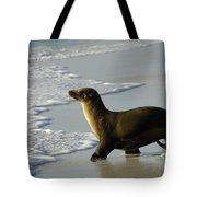 Galapagos Sea Lion In Gardner Bay Tote Bag