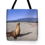Galapagos Sea Lion Juvenile On Beach Tote Bag