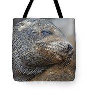 Galapagos Sea Lion Sleeping Tote Bag
