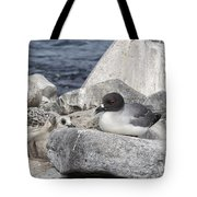 Galapagos Seagull And Her Chick Tote Bag
