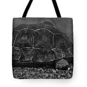 Galapagos Tortoise Baby Tote Bag