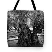 Garden Of Gethsemane Olive Tree Tote Bag