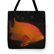 Garibaldi Channel Islands Np California Tote Bag