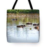 Gathering - Mallars Ducks In Creek Enkopingsaan  Tote Bag