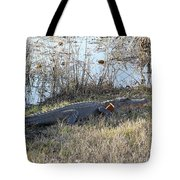 Gator Football Tote Bag by Al Powell Photography USA