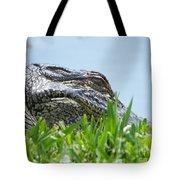 Gator Watching Tote Bag