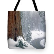 2m6836-generals Highway In The Giant Sequoias Tote Bag