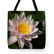 Gently Pink Waterlily In The Hot Mediterranean Sun Tote Bag