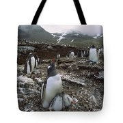 Gentoo Penguin And Chicks South Georgia Tote Bag