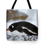 Gentoo Penguin On Nest Tote Bag