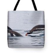 Gentoo Penguins Porpoising Paradise Bay Tote Bag