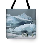 Gentoo Penguins With Icebergs Antarctica Tote Bag
