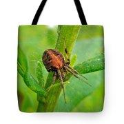 Genus Araneus Orb Weaver Spider - Brown And Orange Tote Bag