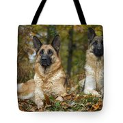German Shepherd Dogs Tote Bag