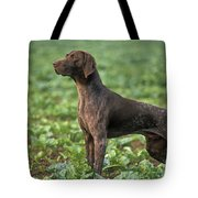 German Short-haired Pointer Tote Bag