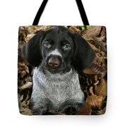 German Wire-haired Pointer Puppy Tote Bag