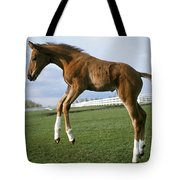 Getting An Early Start Tote Bag