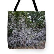 Ghost Trees 1 Tote Bag