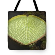 Giant Amazonian Water Lily Pads Closeup Tote Bag