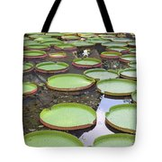 Giant Amazonian Water Lily Pads Tote Bag