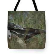 Giant Anteater And  Young In Cerrado Tote Bag