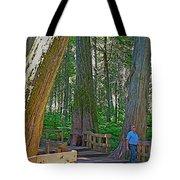 Giant Cedar Grove On Giant Cedars Trail In Mount Revelstoke Np-bc Tote Bag
